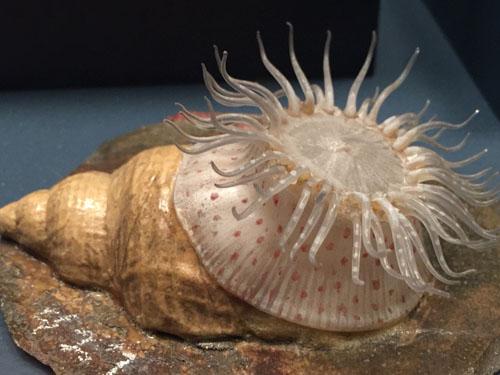 Blaschka Glass Anemone Marine Life Model